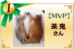 MVP 茶鬼さん